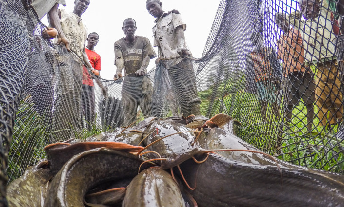 Over 4,000 fish farmers, traders and input providers in Kenya receive 'aquatips' and market advice through their phones © Farm Africa/Mwangi Kirub
