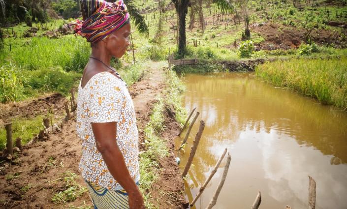 Community-run fish ponds are providing viable alternatives to rice and cassava farming © Success Kamara/WorldFish
