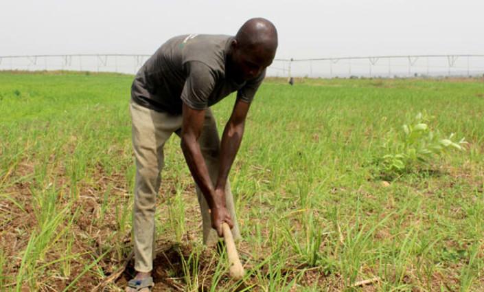 Moses Magaji is a smallscale farmer in Nigeria. © Linus Unah