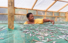 A new 'solar tent' fish dryer being used by Lake Malawi fish processors © MUFUNANJI MAGALASI