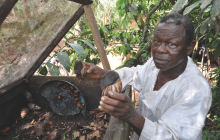 Small-scale giant snail farming is an important source of income for farmers © ICRAF/C Atia