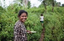 About 3,000 Timorese farmers trialled, tested and replicated the new seed varieties © C. Ashleigh/ACIAR