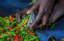 En Zambie, les producteurs de légumes ont accès à un marché durable et fiable pour leurs piments et leur ail. © Tommy Trenchard/Alamy Stock Photo