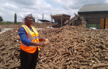 Yemisi Iranloye's cassava-processing business is one of the largest starch producing companies in Nigeria © Oluyinka Alawode