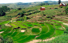Terraced farms are improving crop production for hundreds of thousands of rural smallholder farmers in Rwanda © Aimable Twahirwa