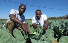 Au Zimbabwe, les frères Prosper et Prince Chikwara utilisent des techniques d'agriculture de précision, telles que préconisées par la nouvelle politique d'AIC. © Busani Bafana