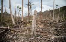 Hurricane Maria caused widespread devastation to Dominica's agriculture sector © Tomás Ayuso/www.IRINnews.org