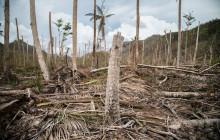 En 2017, l'ouragan Maria a ravagé le secteur agricole de la Dominique. </br> © Tomás Ayuso/www.IRINnews.org