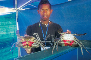 Giant mud crabs could be a significant source of income in Madagascar if crab fishing becomes sustainable © M. ANDRIATIANA