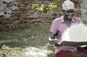 In northern Uganda, a social enterprise has trained over 11,000 poor rural women in rice production to help them earn a living © Victor Samuel Huckabee