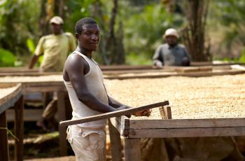 Le poivre de Penja est l'un des trois produits africains qui bénéficient d'une indication géographique protégée interdisant l'utilisation du nom de produit en dehors de sa région d'origine. © Hemis/Alamy Stock Photo