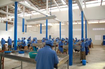 L'usine de Tolaro Global se fournit en noix de cajou auprès de 7 000 agriculteurs. © Tolaro Global