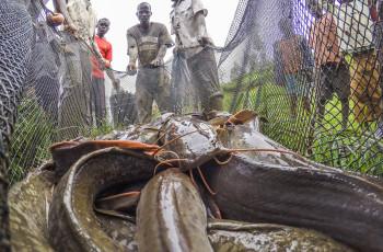 Over 4,000 fish farmers, traders and input providers in Kenya receive 'aquatips' and market advice through their phones © Farm Africa/Mwangi Kirub