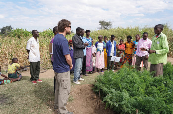 Farming households are doubling their income after adopting intensified agricultural practices learned during farmer field schools in Malawi © C. Mkoka