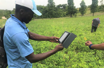 Farmforce is used to analyse the severity of several types of leaf disease that effect peanut production in Haiti © Eric Carroll/Elevate Social Businesses
