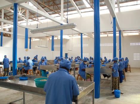 Tolaro Global's processing facility buys cashews from 7,000 farmers © Tolaro Global