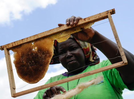 Exports of honey jumped 613% between 2000 and 2013 in Africa © Joerg Boethling/Alamy Stock Photo