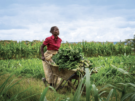 Agricultural production is central to young people's livelihoods. © Boezie/E+/Getty Images