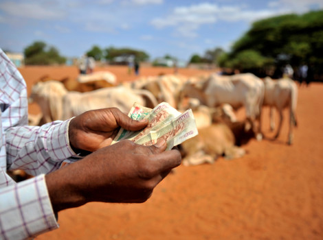 Insurance initiatives are helping farmers in Wajir, northern Kenya, protect their livestock and increase productivity © ILRI/Riccardo Gangale