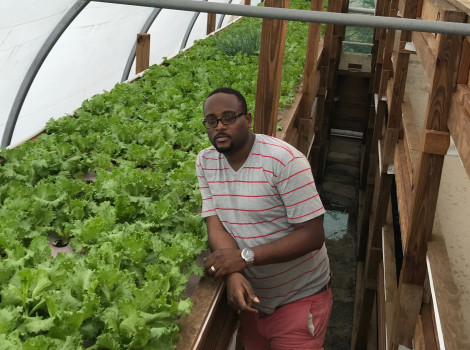 Using aquaponics, Green Haven Fresh Farm produces 1.8 t of lettuce every month © Green Haven Fresh Farm