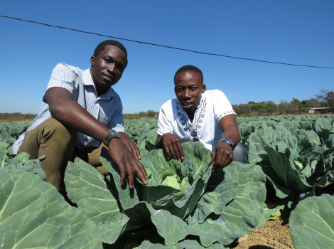 In Zimbabwe, brothers Prosper and Prince Chikwara are using precision farming techniques at their horticulture farm, as promoted through a new CSA Policy © Busani Bafana