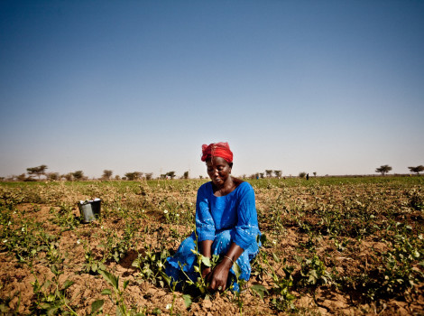 The agricultural sector often provides up to two-thirds of employment in fragile states © Pablo Tosco/Oxfam International