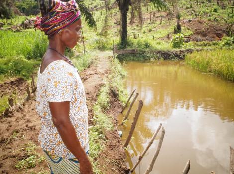 Les viviers fournissent une alternative durable à la culture du riz et du manioc. © Success Kamara/WorldFish