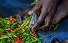 In Zambia, vegetable farmers are accessing a sustainable and reliable market for their chilli and garlic produce © Tommy Trenchard/Alamy Stock Photo