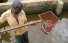 Fish farming Cameroon © Randall Brummett