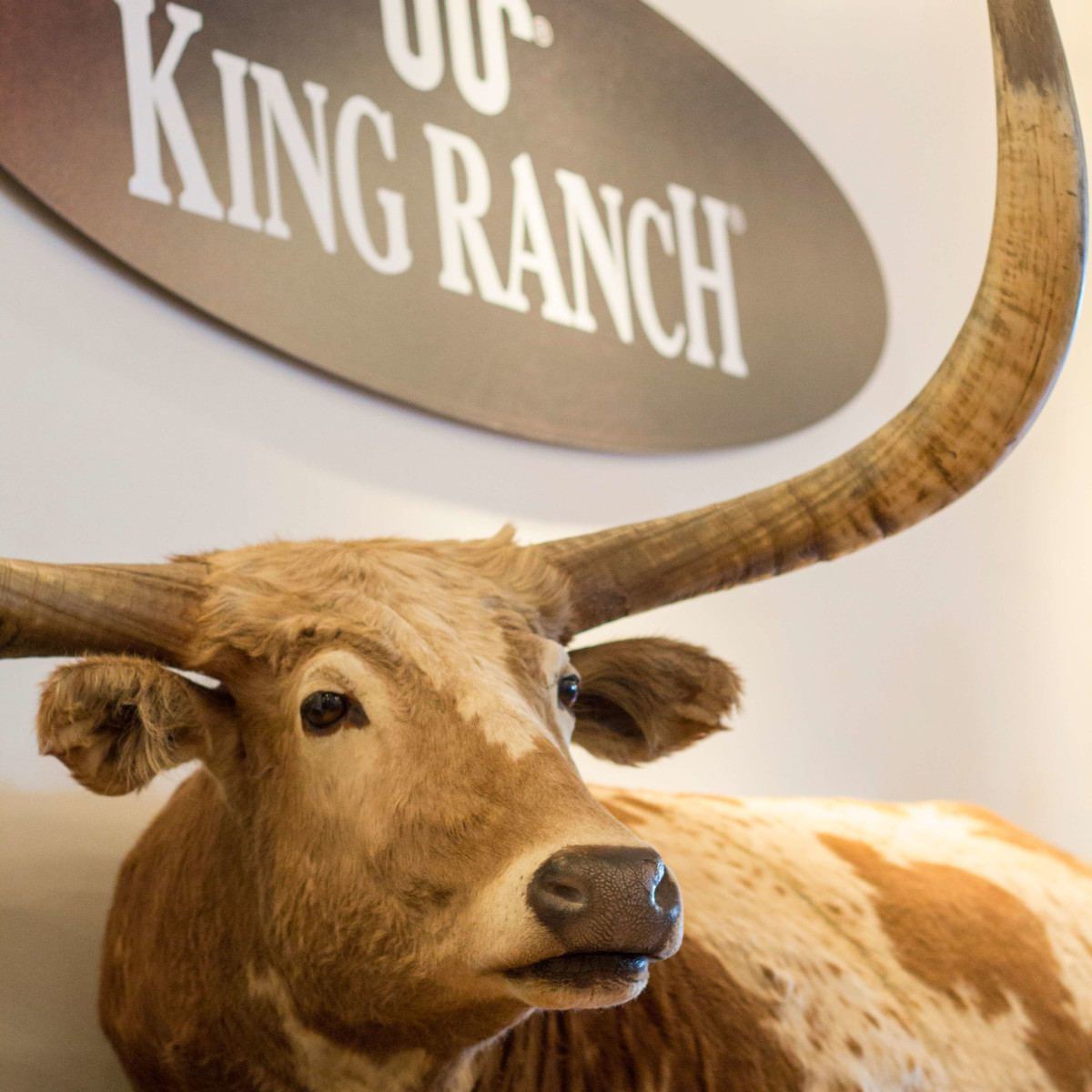 King Ranch Saddle Shop in Houston, August 2016