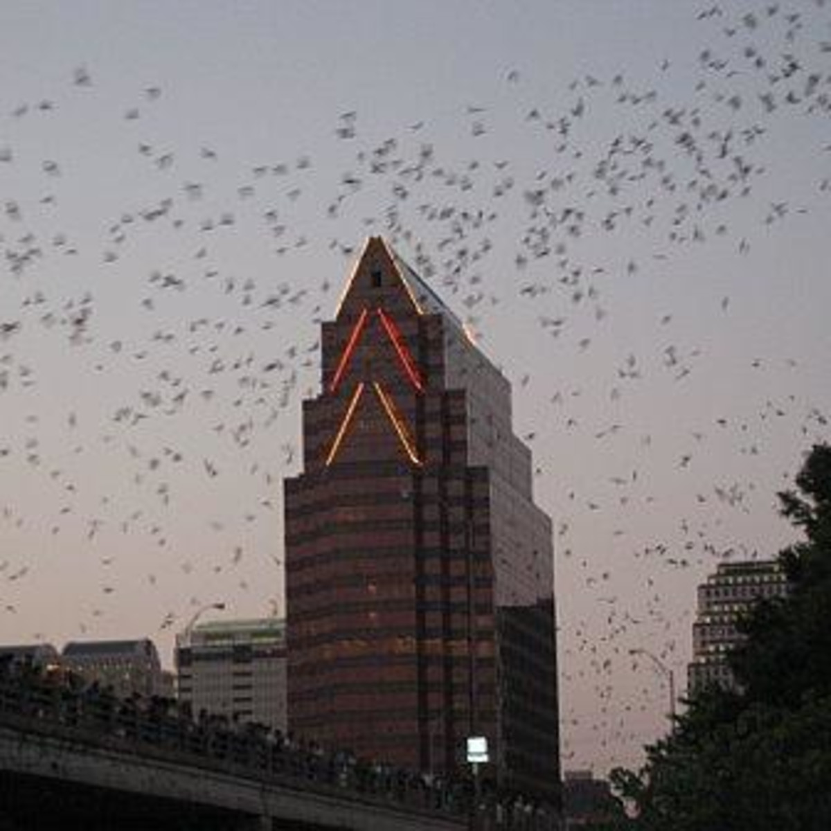 Austin Photo: Places_unique_austin_congress_avenue_bat_bridge_bats