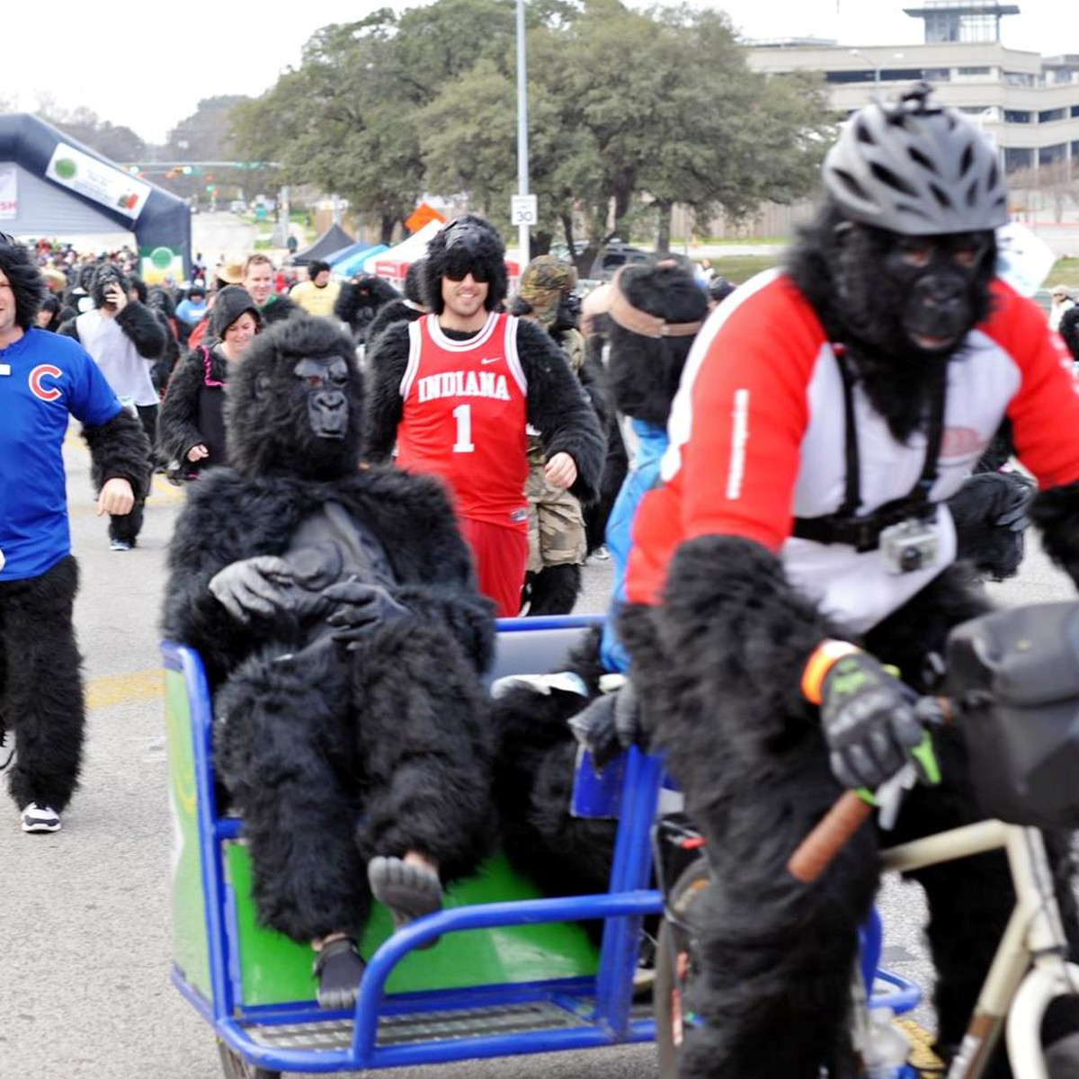 Austin Photo Set: News_Matt_austin gorilla run_ jan 2013_3