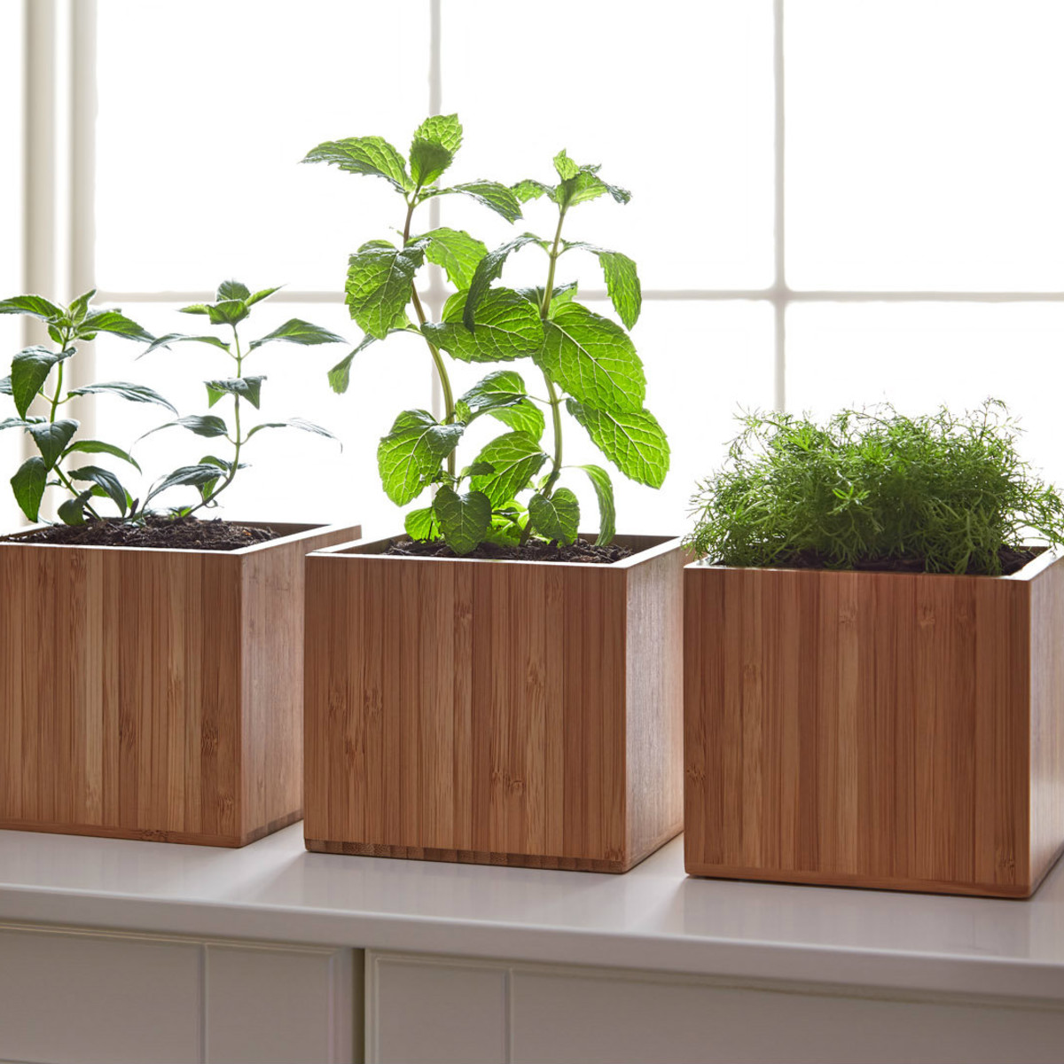 Grow boxes from Gardenuity