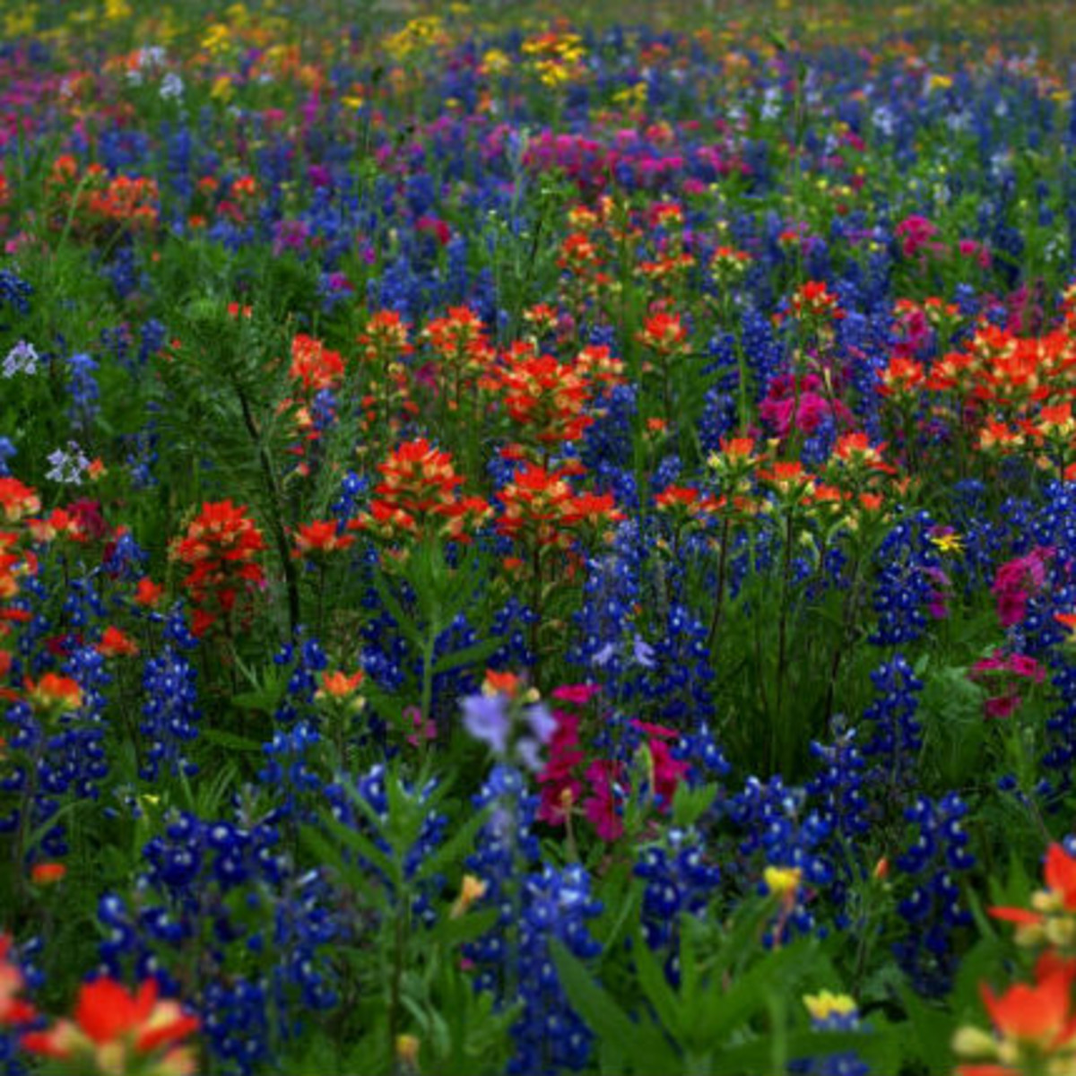 Highway 290 Wildflowers