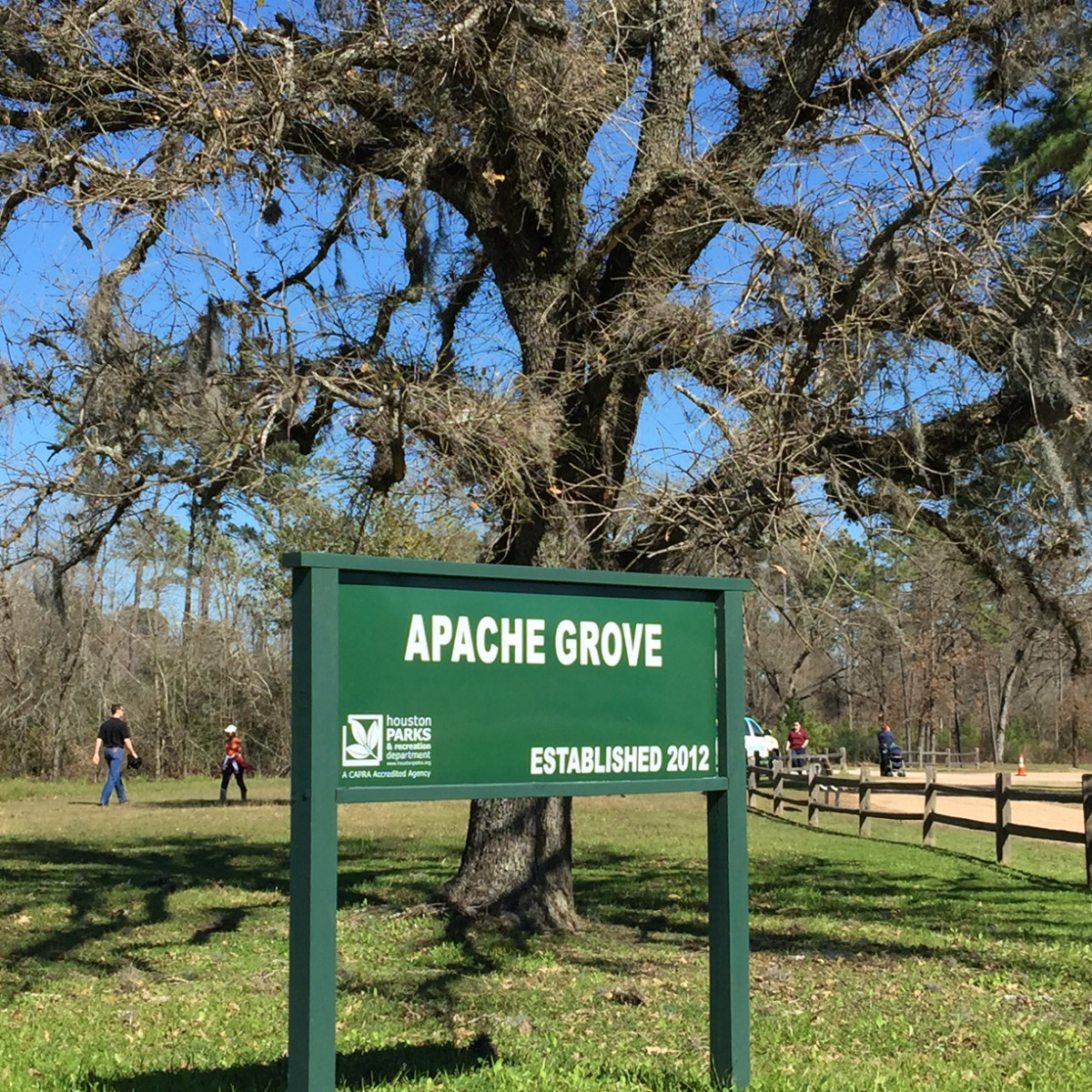Apache tree planting, Memorial Park, Jan. 2016, Apache Grove