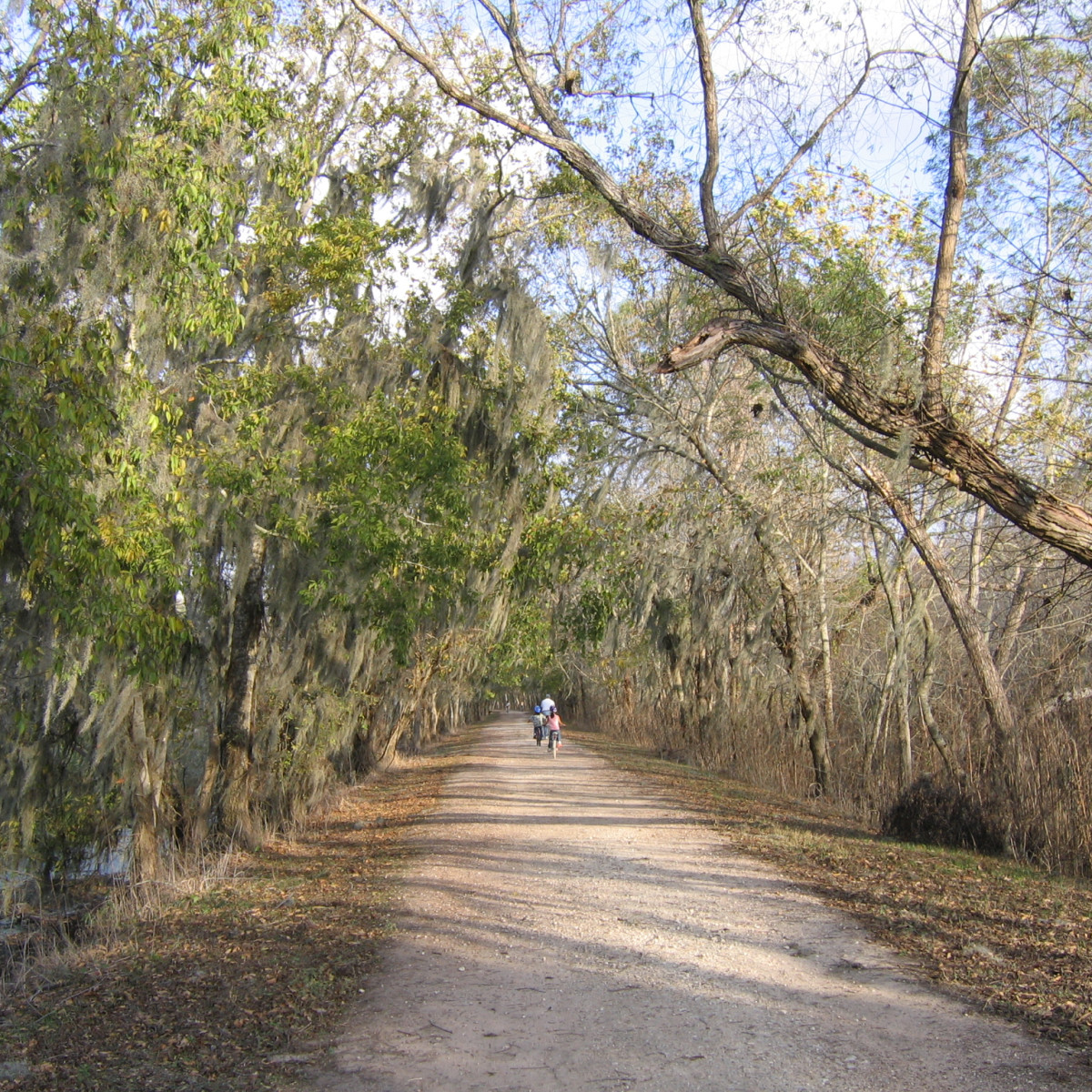 Brazos Bend hiking trail