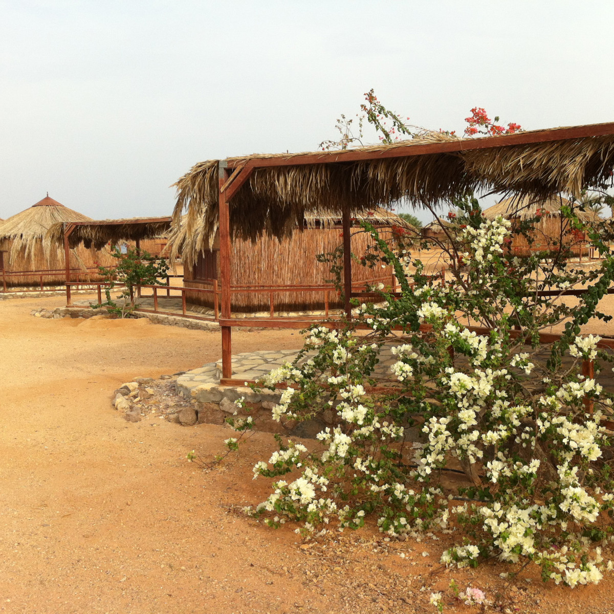 Bougainvillea-shaded huts at Mutawea's camp, Castle Beach Sinai Egypt
