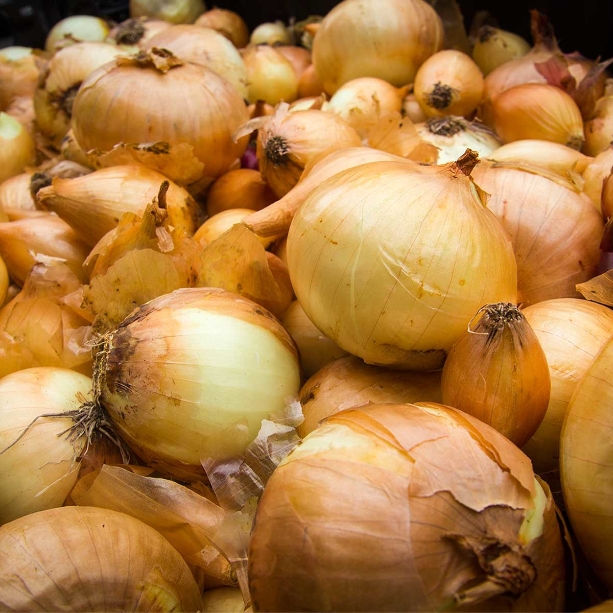 Photo of create of onions