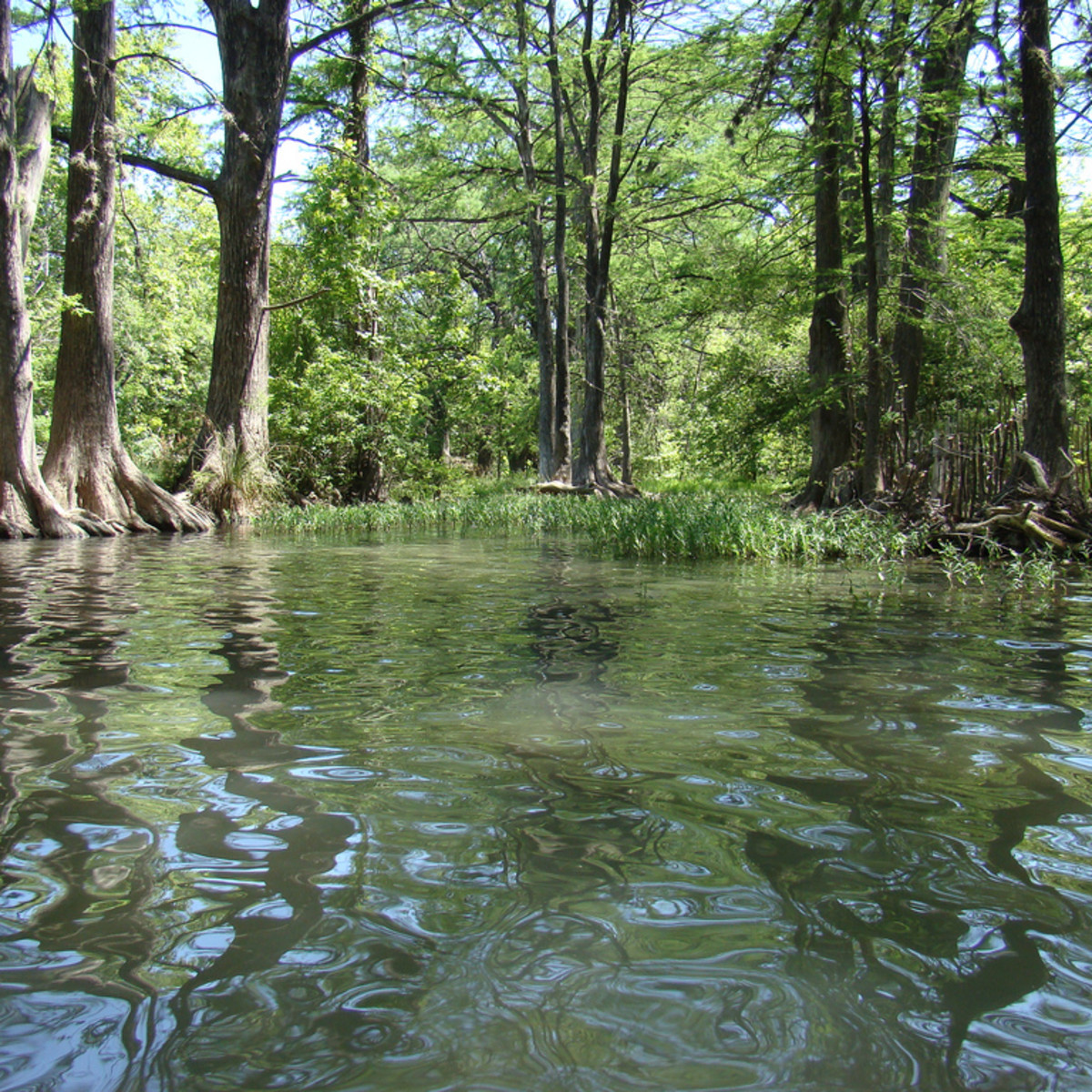 Austin Photo Set: News_Peter Lewis_Swimming Holes_blue hole_wimberley_june 2011_manue reynolds