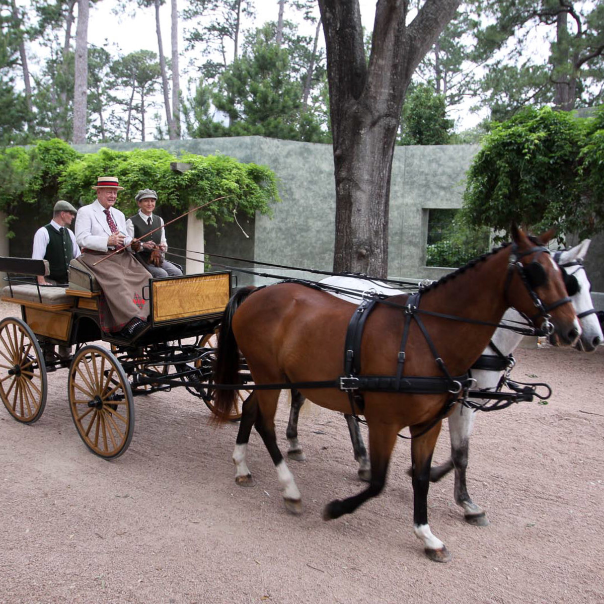 News_Park party_Stewart Morris_horses_carriage