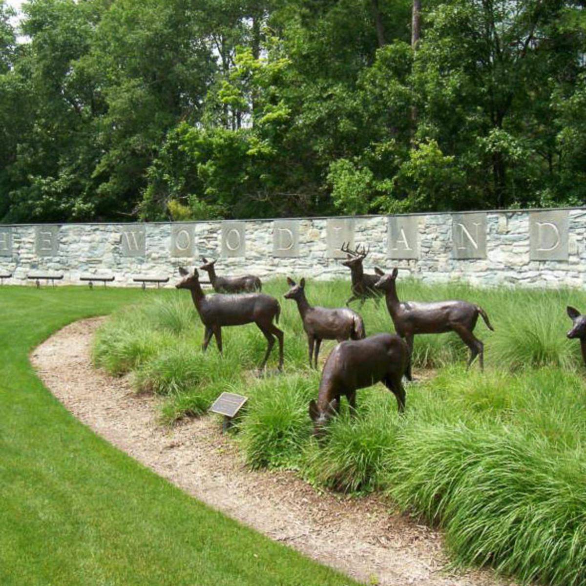 News_The Woodlands_deer