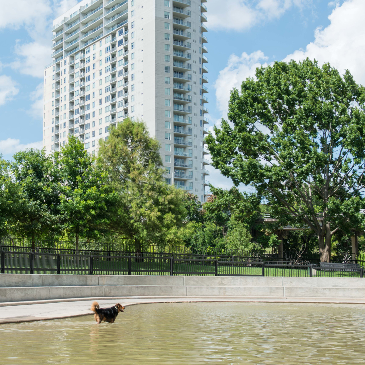 Johnny Steele Dog Park Allen Parkway dog in water
