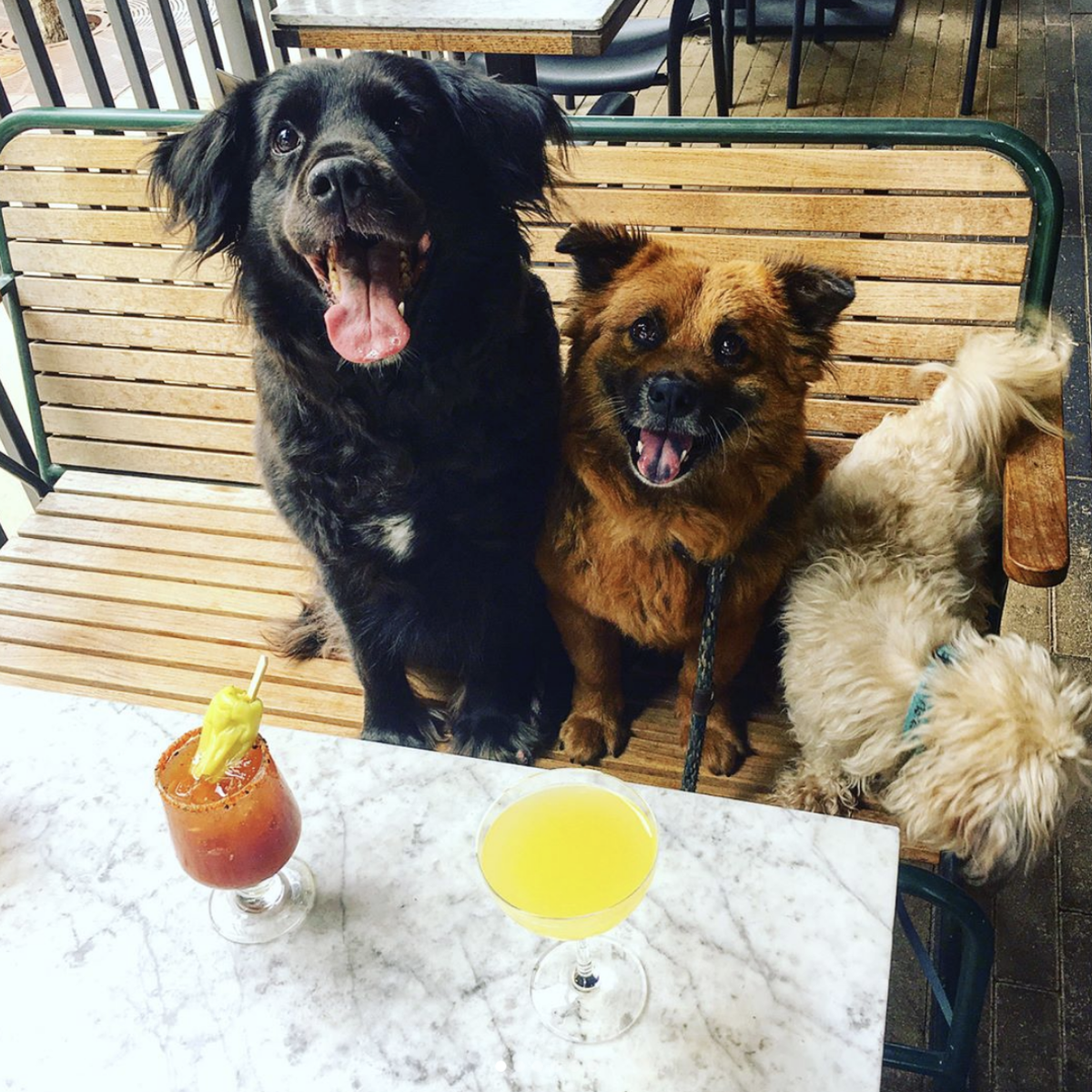 Dogs on a patio