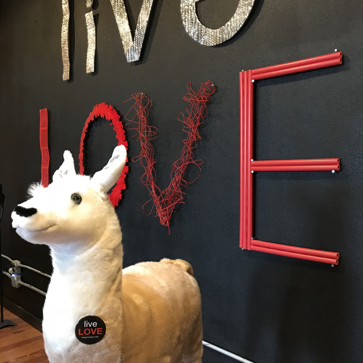 Love in Motion Lola the llama