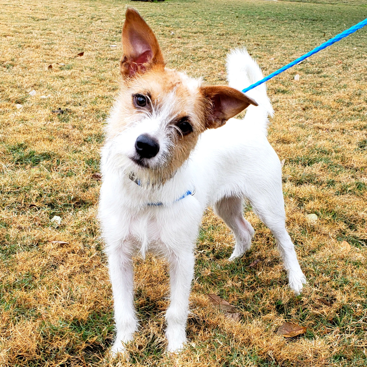 Pet of the Week - Buddy terrier
