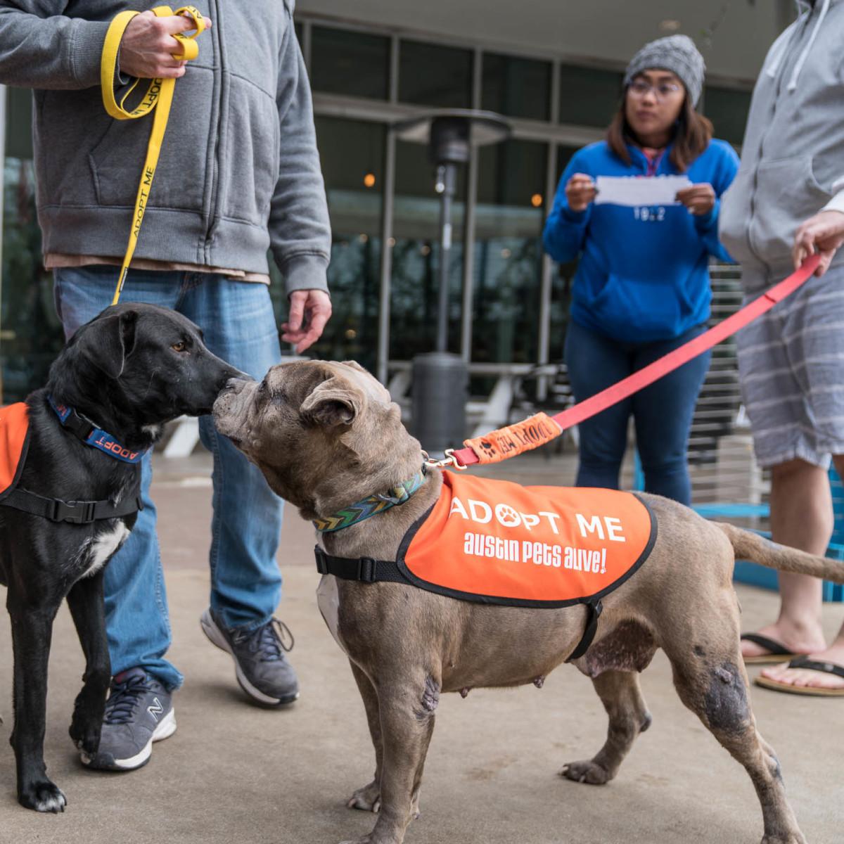 Frost Austin Eastcider Pup-a-palooza Austin Pets Alive