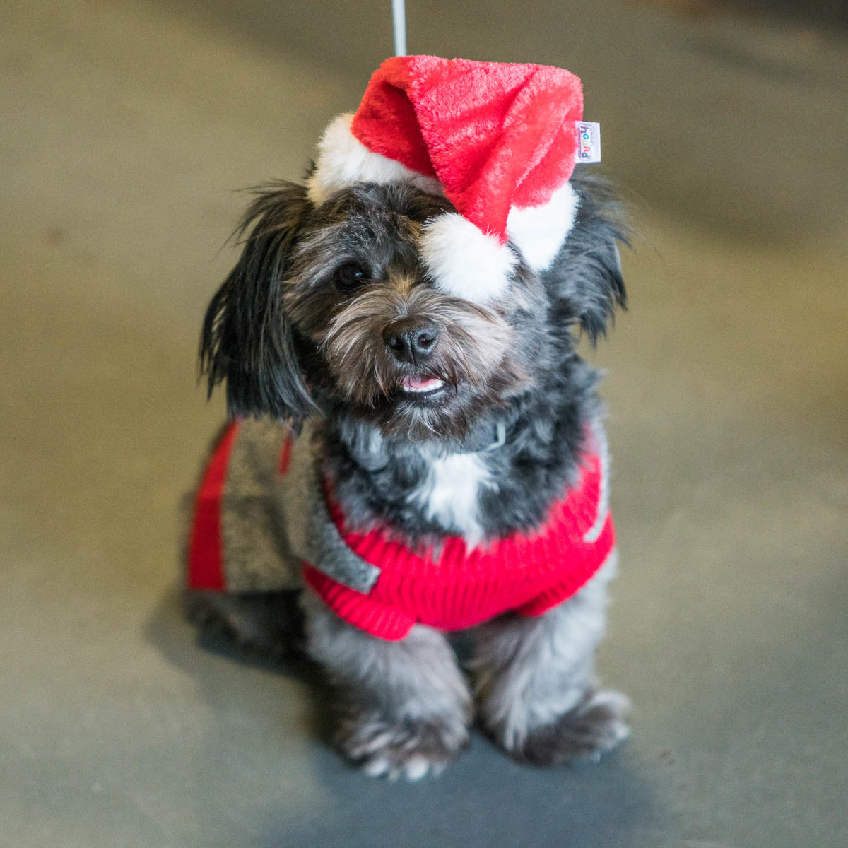 Frost Austin Eastcider Pup-a-palooza