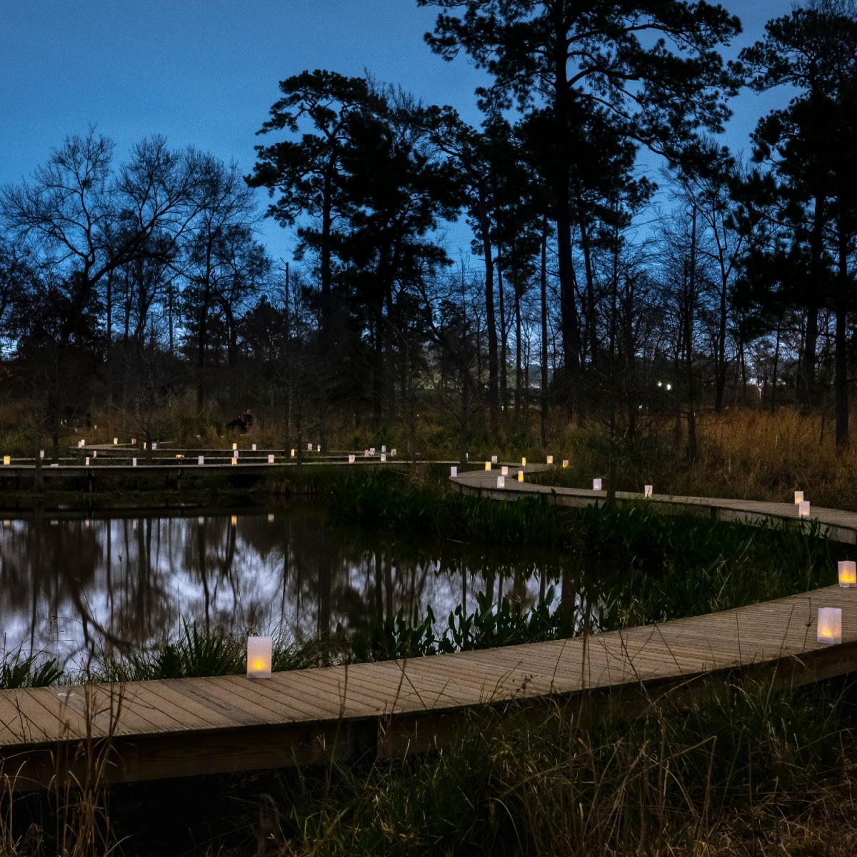 Houston Arboretum ravine bridge