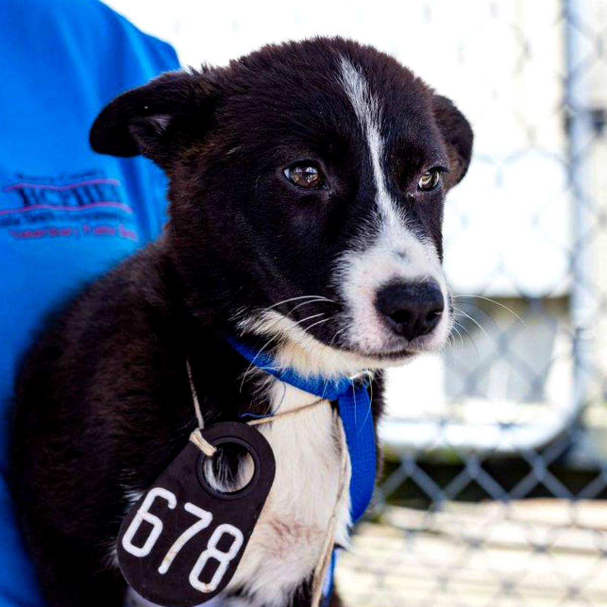 puppy houston Harris County Animal Shelter