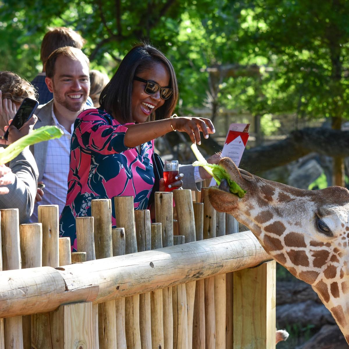 Giraffe feeding, Fort Worth Zoo, Heart Ball
